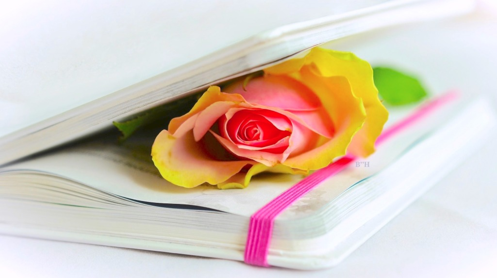 the poetry of grief, yellow rose inside a closed book