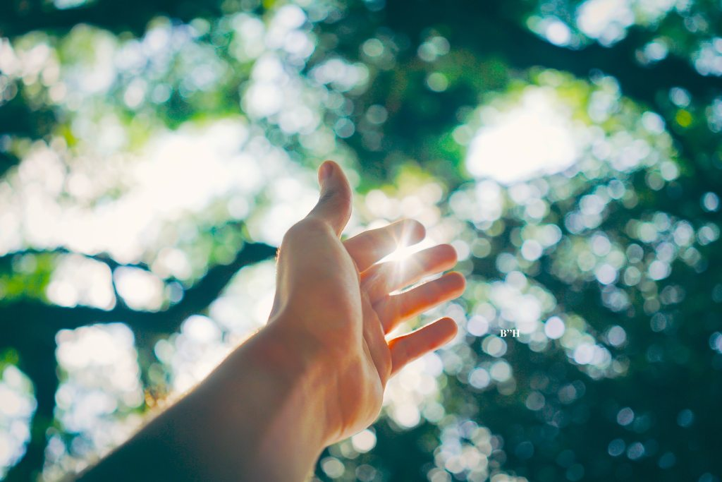 hand reaching up to sky with foliage